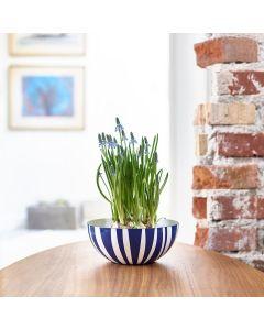 Cathrineholm Bolle Stripete Blå 30 cm